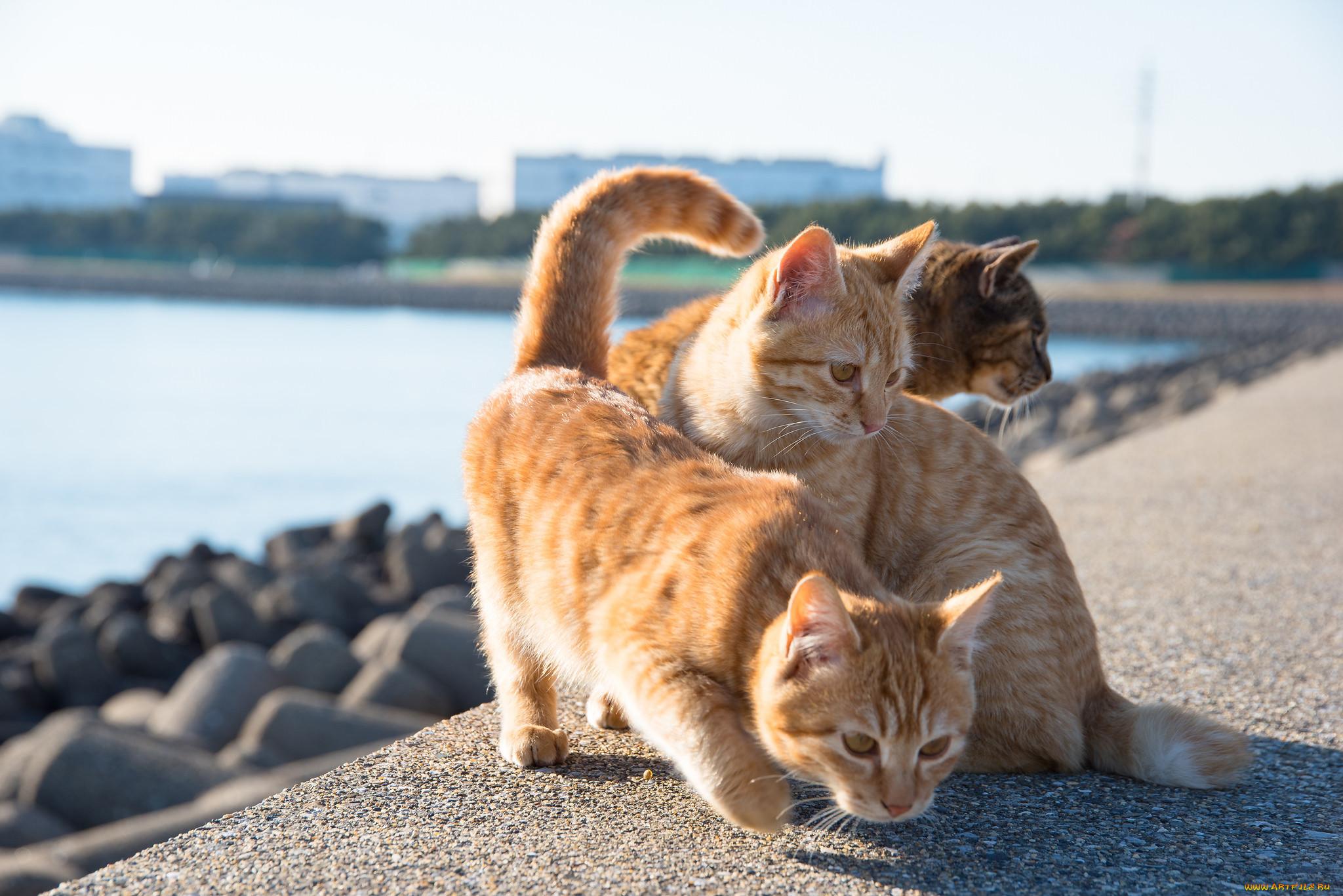 Картинки котята в море